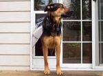 Sliding Glass Dog Door, Patio Pet Doors or Panel Pet Doors