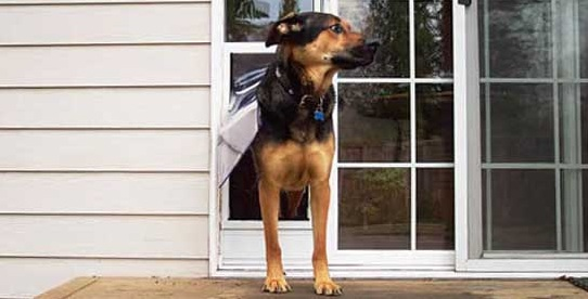 Sliding Glass Dog Door